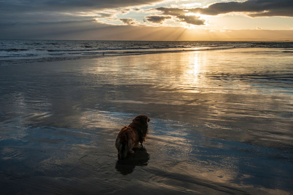 A beautiful Dog standing in the seawater on the beach