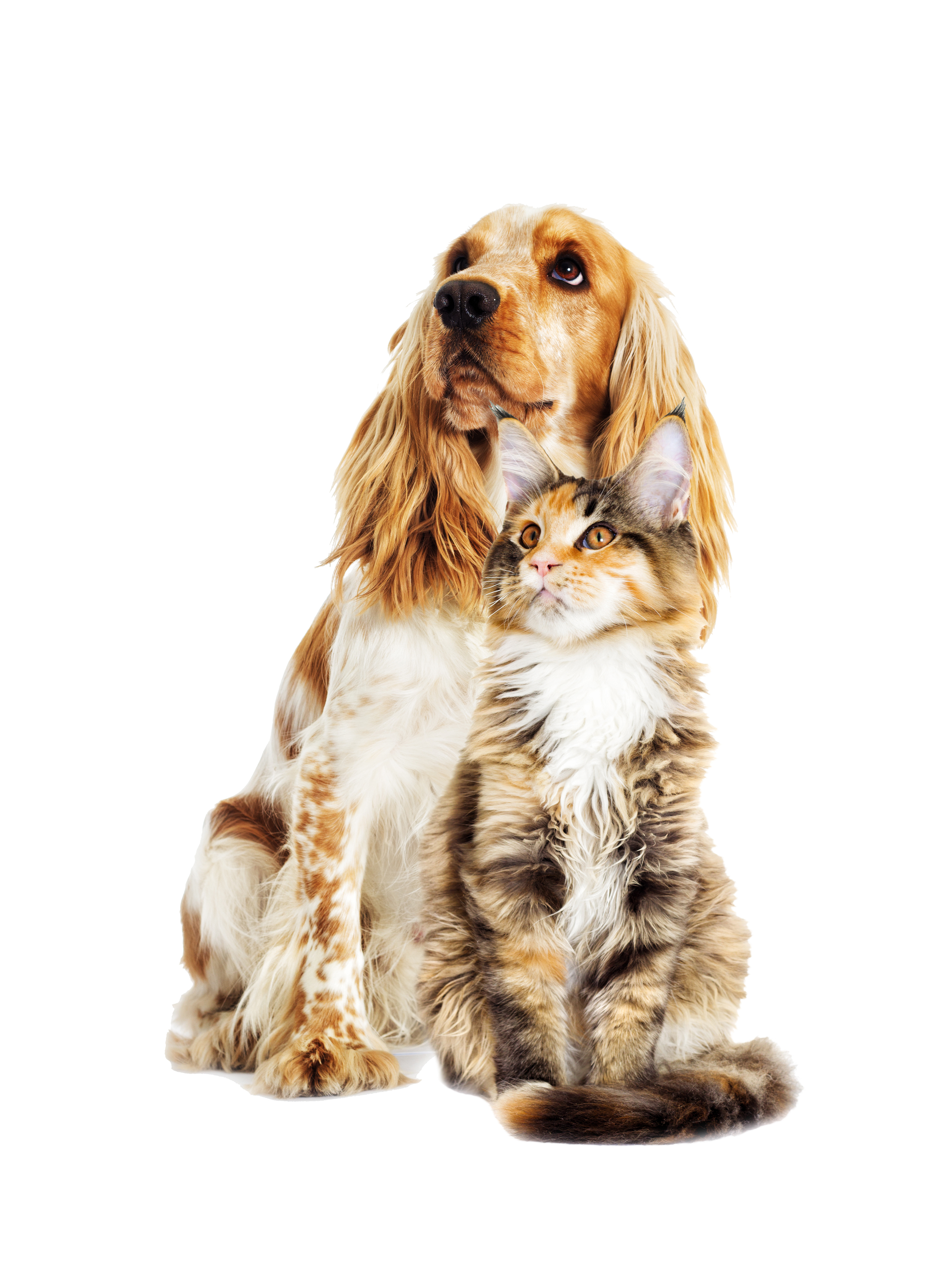 Dog and cat white background isolated image