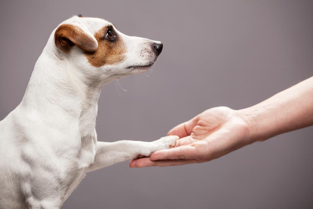 Human Hand Holding Dog