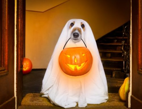 Halloween Fun with Your Pets