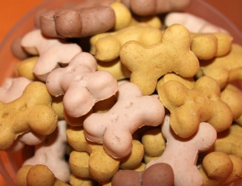 Festive Treats For Your Pets