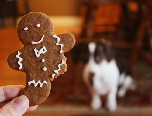 Taboo Foods For Pets