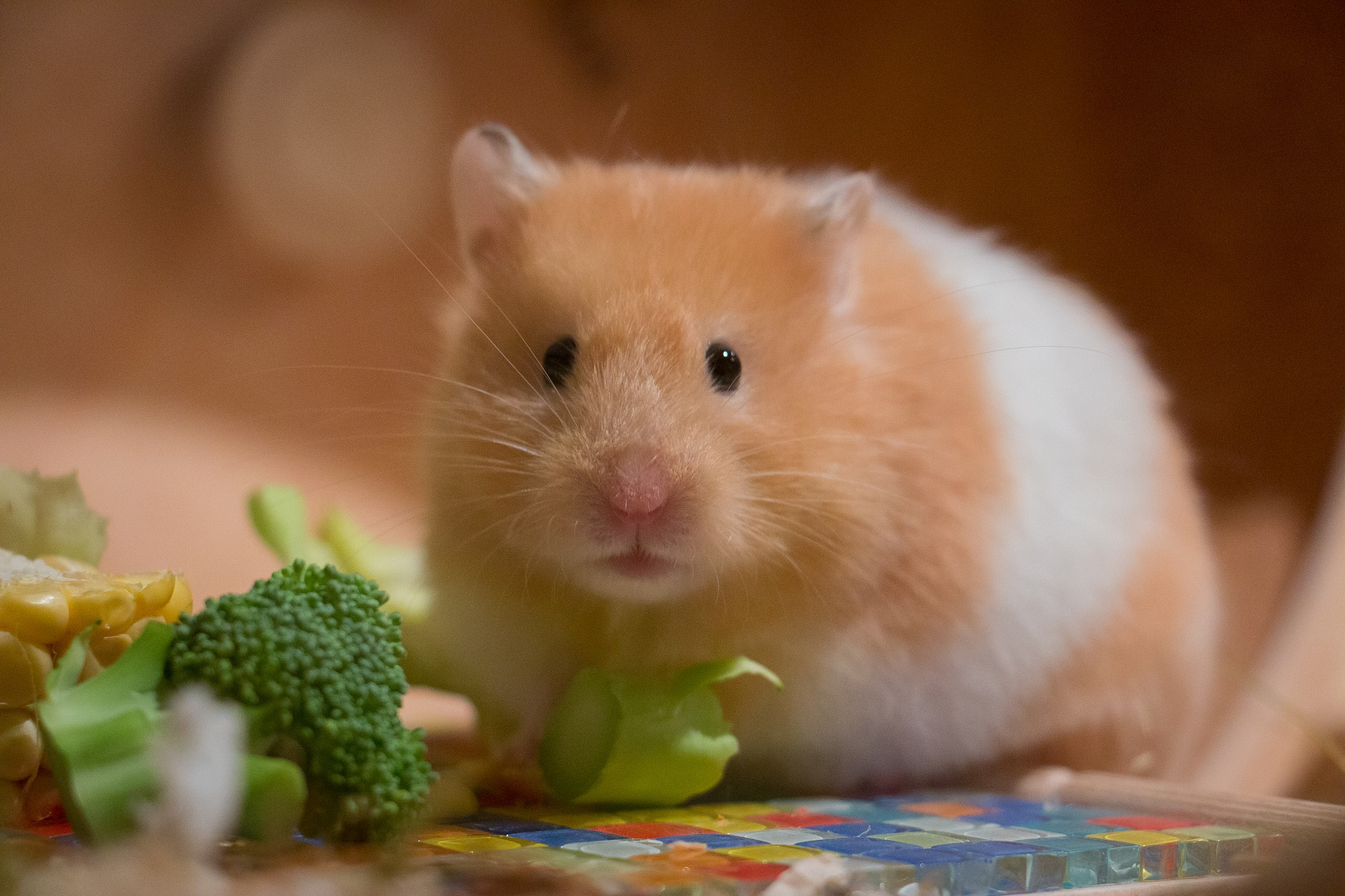 Five Things to Consider Before Adopting an Exotic Pet