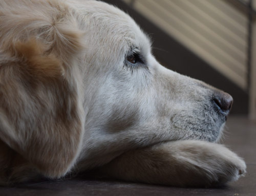 Back to School and Change in Schedules – This Affects Pets Too