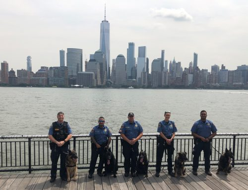 Service Highlight – Wellness and Preventative Care for K-9 Police Officers