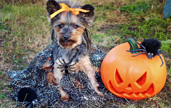 How to keep your dog safe during trick-or-treating