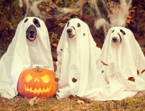 The Spookiest Pet Halloween Costumes