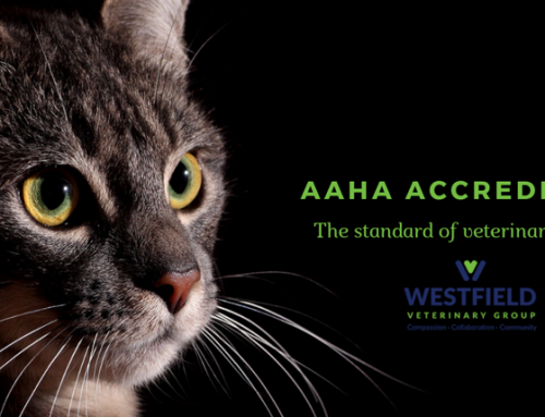 WVG Recently Received our AAHA Re-Certification