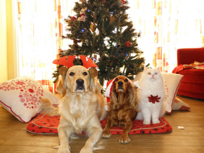 How to keep pets safe during the holidays