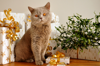 The best type of gifts for pets
