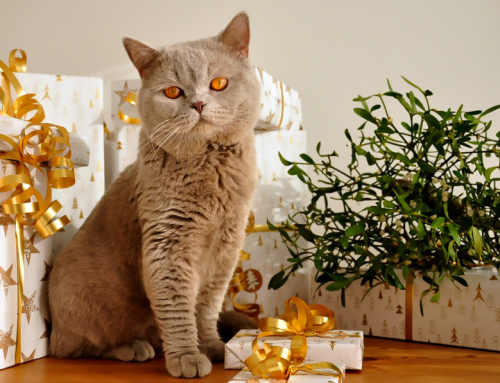 Holiday Gift Ideas for Our Pets