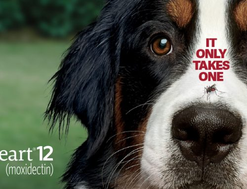 Service Spotlight: Protect Your Pup with ProHeart 12