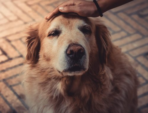True or False: Is One Dog Year Really Seven Human Years?