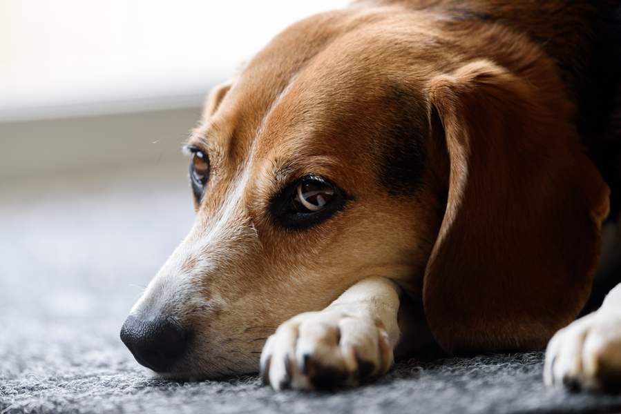 Keep Your Pet Safe at Home by Avoiding these Common Dangers
