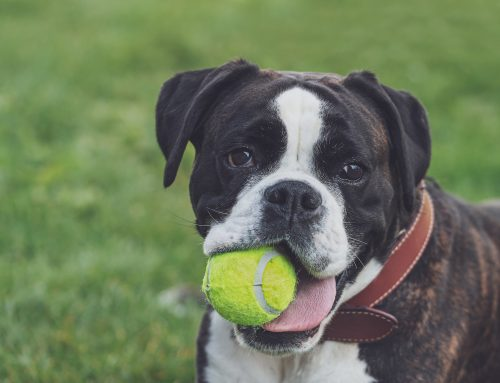 Keeping Your Pets Occupied at Home