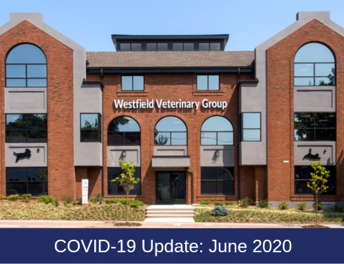 Westfield Veterinary Group COVID-19 Update: June Care Protocols