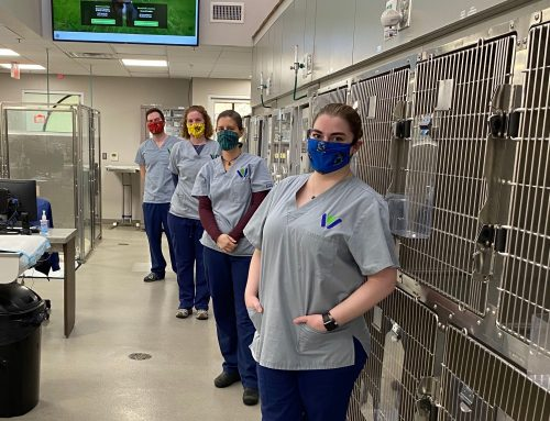 Service Highlight: Sharing Our Appreciation for Our Veterinary Team Members