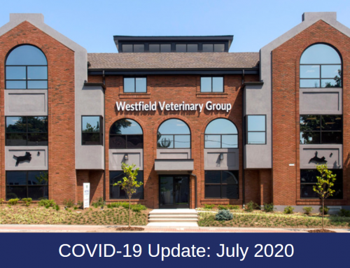 Westfield Veterinary Group COVID-19 Update: July Care Protocols
