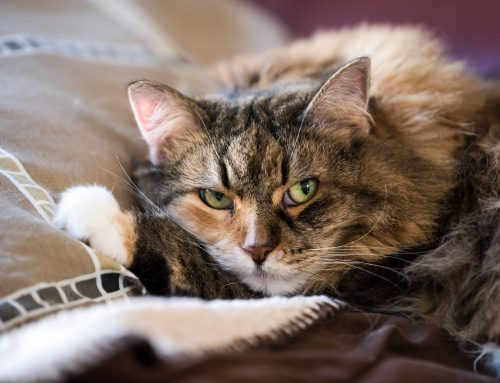 The Benefits of Pet Insurance from Wellness to Emergency