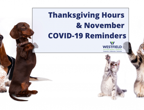 Thanksgiving Hours and COVID-19 Safety Protocols