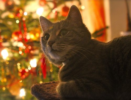 Common Holiday Pet Emergencies and How to Avoid Them