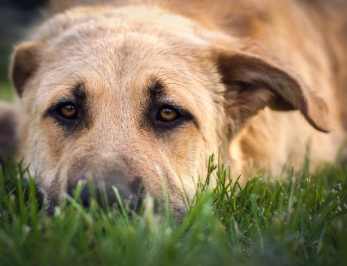 Disease Spotlight: Bloat in Dogs