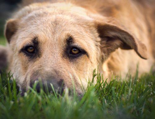 Disease Spotlight: Bloat in Dogs