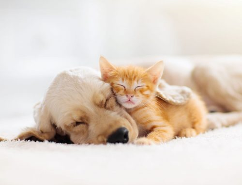 Service Highlight: Puppy and Kitten Wellness Examinations