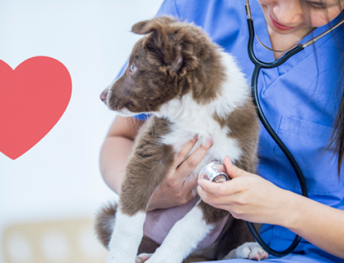 How to Keep Your Pet's Heart Healthy & Strong