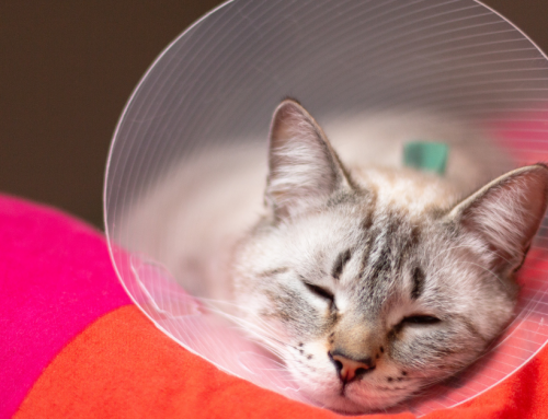 To Spay or Neuter or Not to Spay or Neuter …