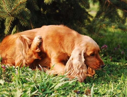 Parasites and Your Pets: Common Pests to Protect Against