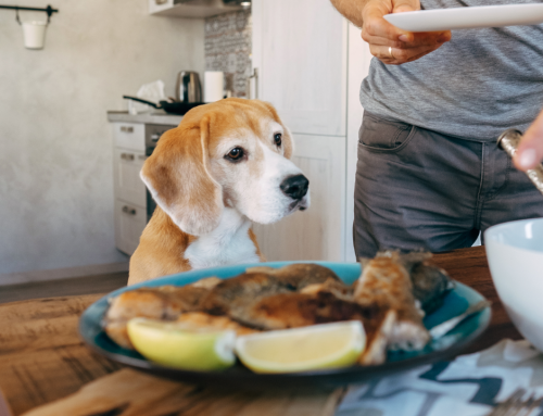 Paws Off! Summer Food Dangers for Dogs and Cats