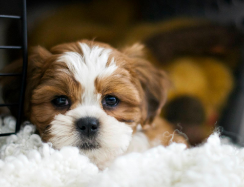 How to Help Pets With Noise Phobias