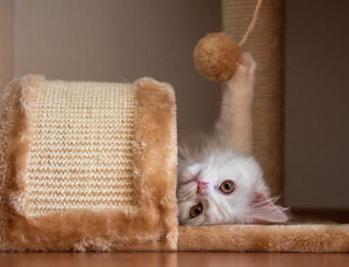 Pet Health Tip: Environmental Enrichment for Dogs and Cats