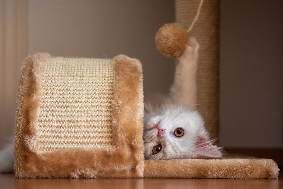 cat upside down playing