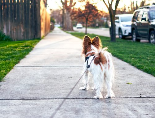 Step/Fitness Trackers For Pets – Are They Helpful?